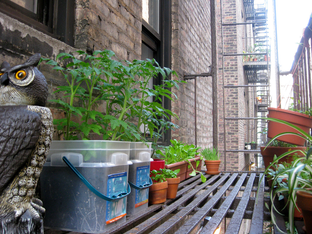 Growing in recycled containers - Recycled containers for gardening ...